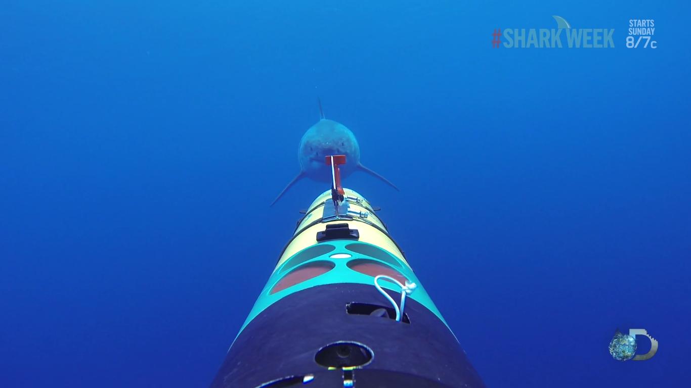 tiburon blanco a la caza de una camara