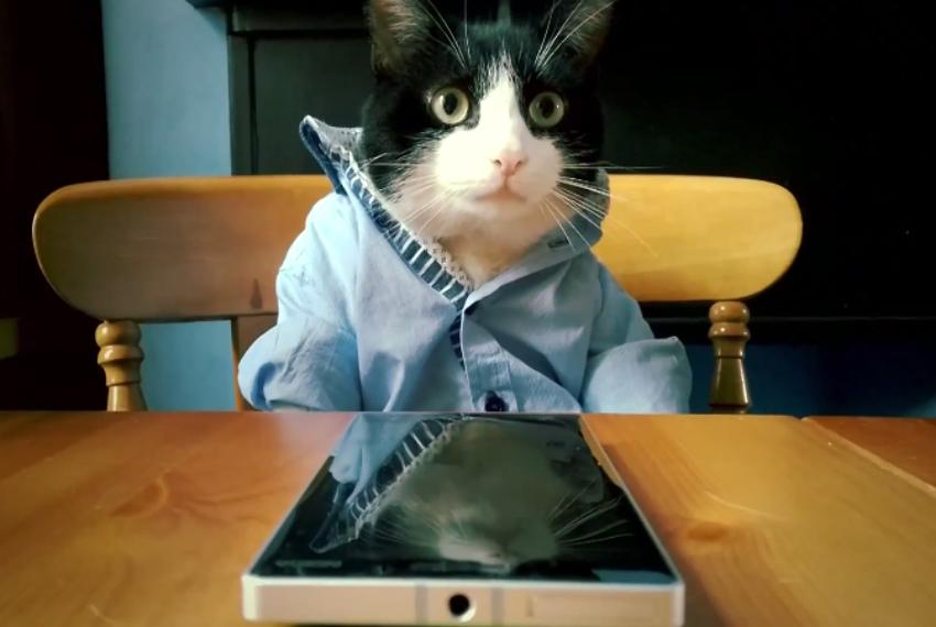 Microsoft cat lumia 930