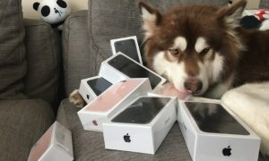 iPhone 7 dog (2)
