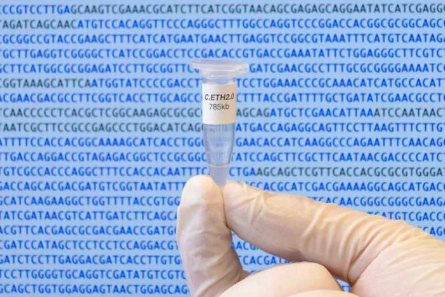 El genoma de Caulobacter ethensis-2.0 creado artificialmente y almacenado en un micro tubo de laboratorio. ETH Zurich / Jonathan Venetz